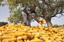 Two million at risk of food shortages in Malawi