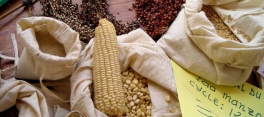 Plant Breeders Bill must be revised – CSOs tell parliament