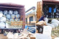 Two arrested with sacks of wee at Ghana-Togo border