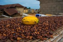 Ghana, Ivory Coast cocoa plan to have limited effect on world prices: report