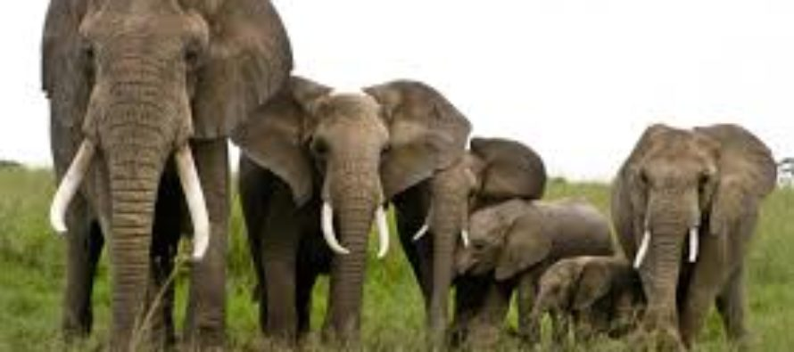 Elephants devastate farms in 21 communities in Assin South
