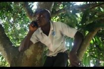 Oku residents cry for help as top of mango tree becomes only spot they make, receive calls