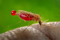 Mosquitoes, bugs invade Tema Community 11