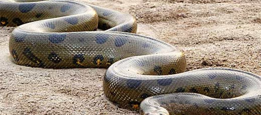 Kenya: Snake blamed for accident that killed 8