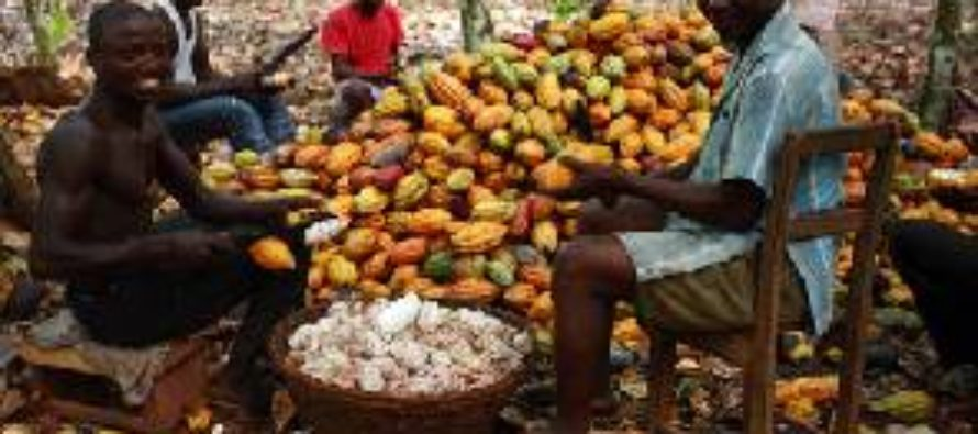 Farmer supports free SHS with five bags of cocoa