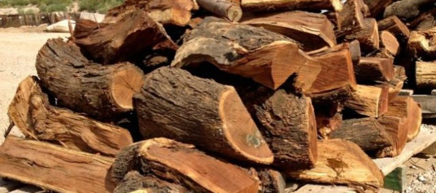 Ghana's wood fuel remains key energy source for households