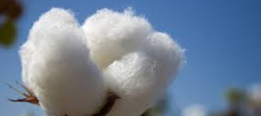 Scientists to release biotech maize, cotton varieties in Kenya