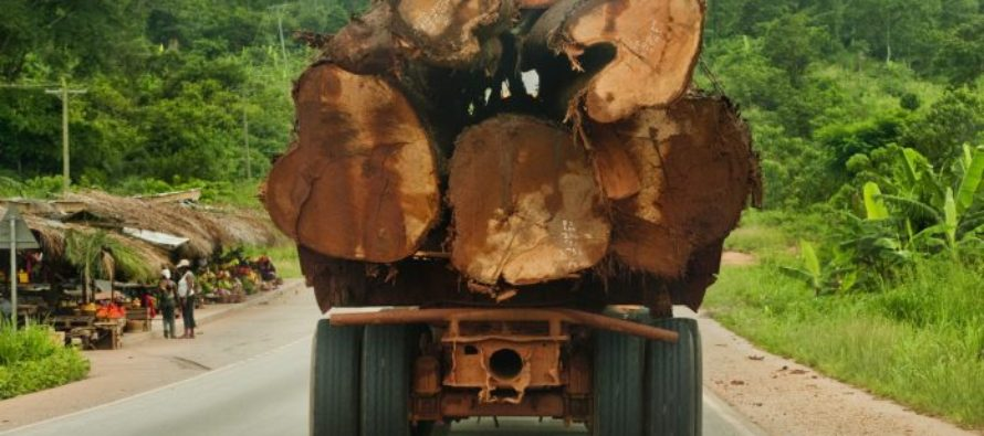 Adopt comprehensive policies to tackle illegal chainsaw lumbering – Oforikrom MP
