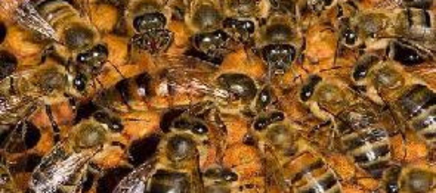 BECE candidate unleashes bees on 'strict invigilator'