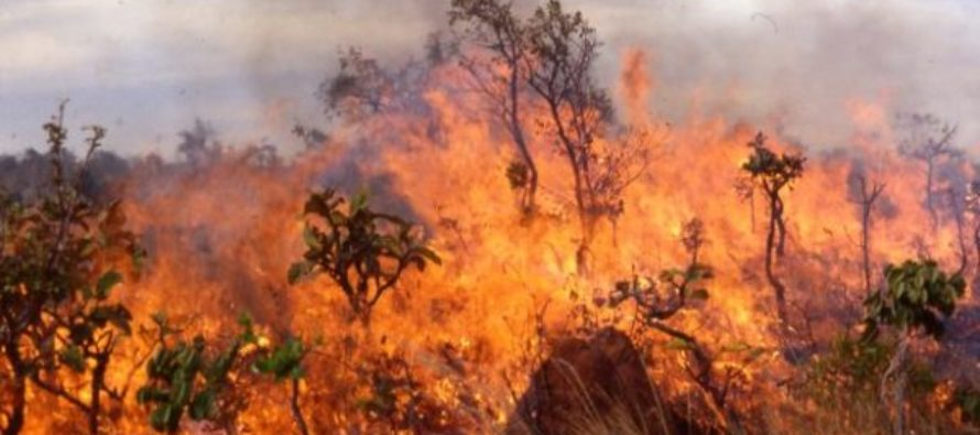 Volta Region: Bushfires decline in 2017