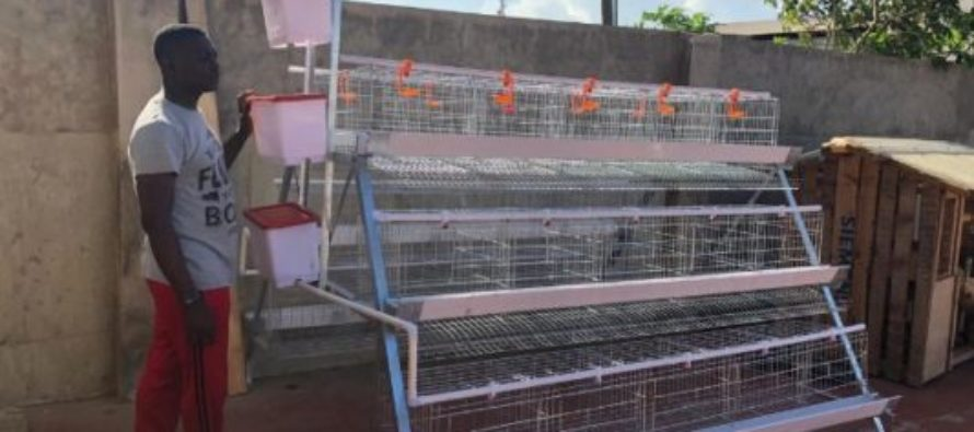 Now anybody can do poultry thanks to Smart Poultry initiative