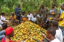 COCOBOD CEO salary slashed by 30% – Gov't rejects Minority overspending claim