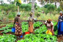 'Malaria-stricken farmers lose 60% of produce yearly'