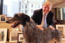 Trump bans eating of dog, cat meat in U.S.