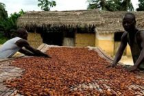 COCOBOD CEO warns of troubling times for cocoa sector if…