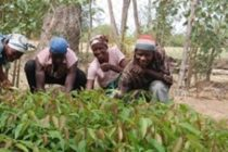 1 million farmers to benefit from fertilizer subsidies in 2019