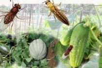 Belief systems affecting disease control efforts
