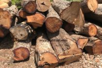 Forestry Commission disputes BBC report on rosewood trade