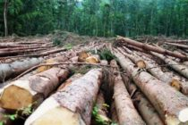 60% of forests lost to degradation, deforestation – Report