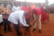 com1,200 dogs vaccinated on rabies day«