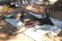 Thai deer found dead with 7kg of 'underwear, plastic bags' in stomach