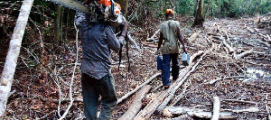 Chief declares war on illegal chainsaw operators