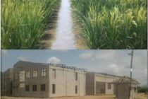 Hohoe to get rice factory under 1D1F