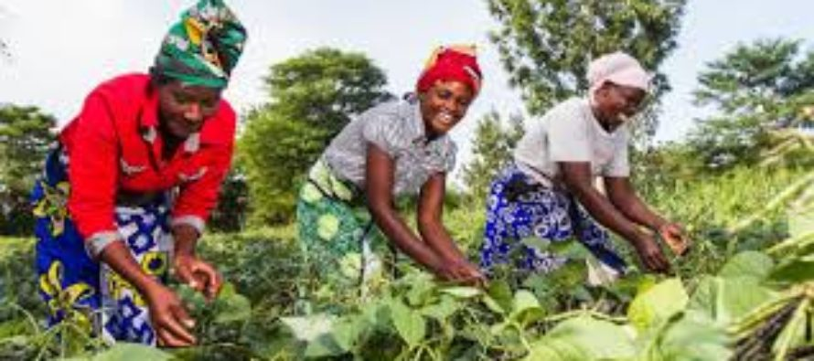 Farming is not a punishment – Oforikrom MCE