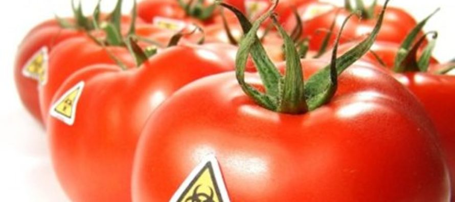 Peasant farmers, others welcome govt's promise not to introduce GMOs