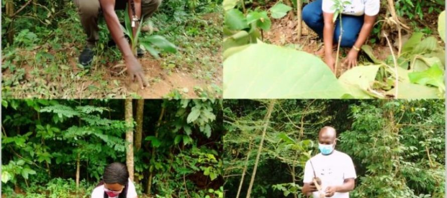 Tafi-Atome: calls for greater culture of tree planting