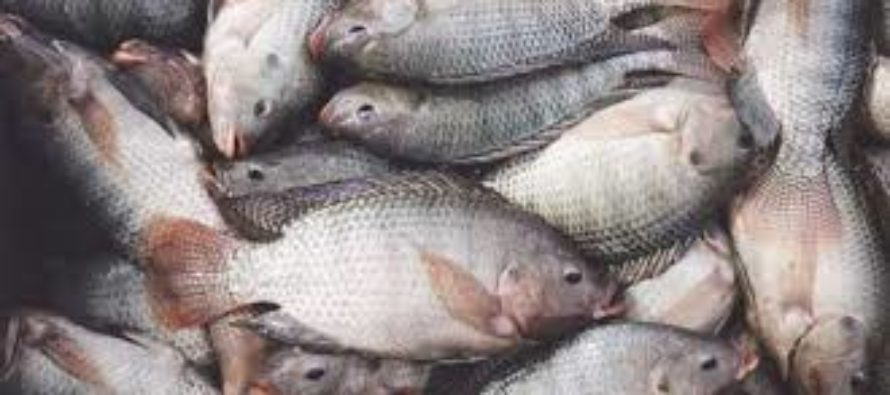 Volta Lake is dead – Fisheries Commission