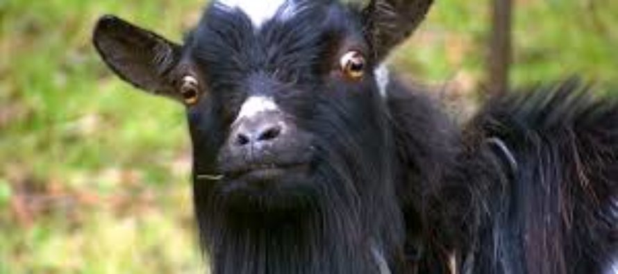 Suspected goat thief lynched in Tamale
