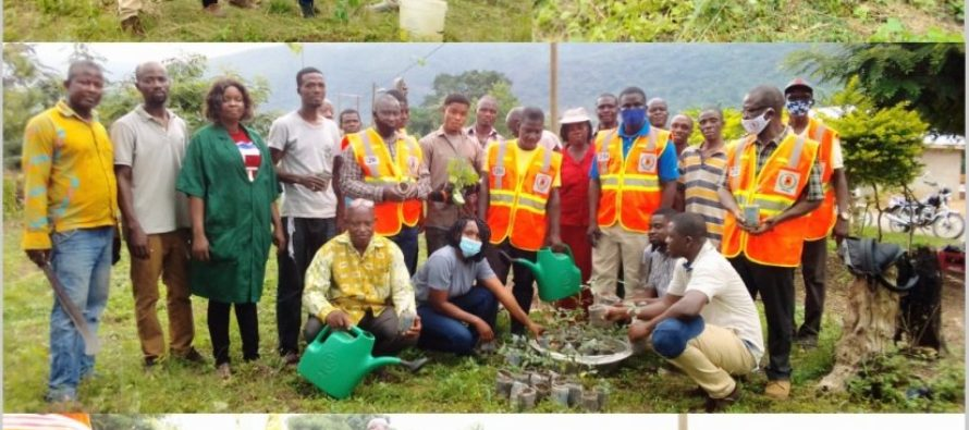 Likpe (O/R): Tree planting enhances environmental sustainability – Group