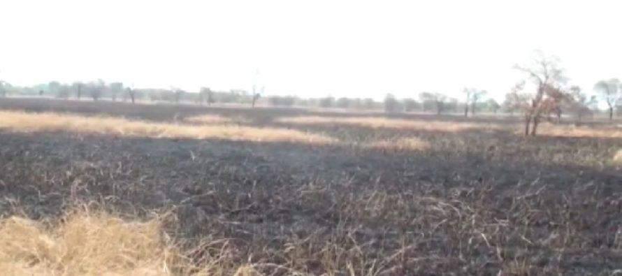 NDC's Northern Chairman's 413-acre rice farm set ablaze a day before party's anti-EC demo