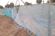 Bed nets not for gardening – Medical Entomologist