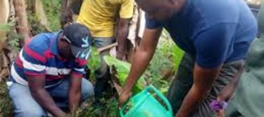 Volta Region to plant about 200,000 trees by June