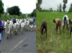 Dambai: One dead, five injured clashes between farmers and Fulani herdsmen