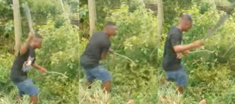 Suspected thief made to weed acres of land as punishment at Bibiani